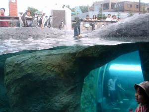 ペンギン館。ガラスの観察窓からペンギンの様子が見られる。 右下に水中のトンネルが見える。